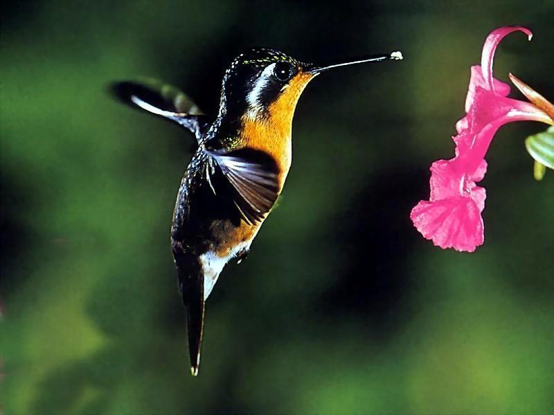 kolibri-5-