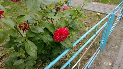 Lumia925_photo-9