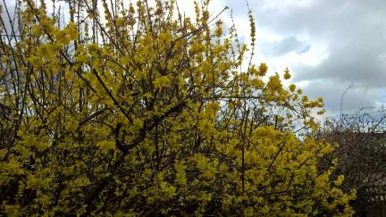 blossom-930-hdr