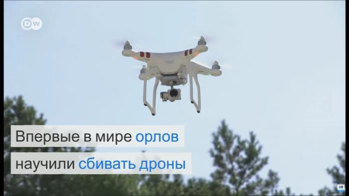 drones-vs-eagles