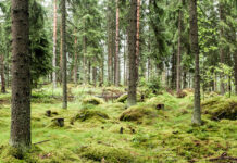 Финский лес