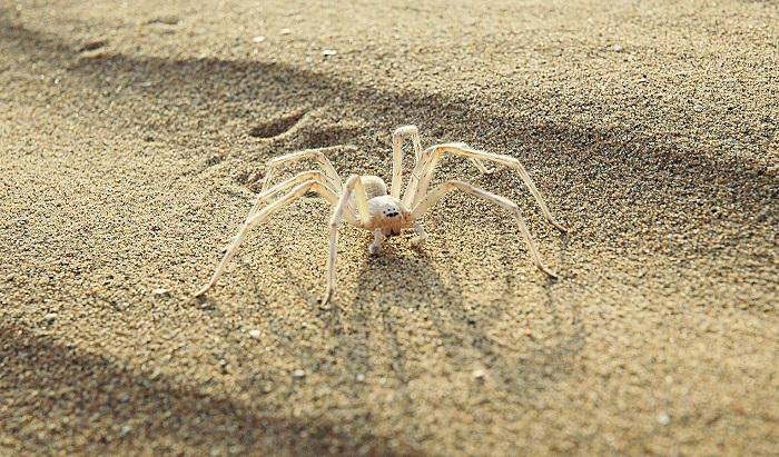BionicFlyingFox_spider