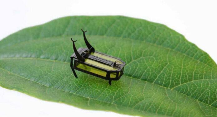 beetle bot