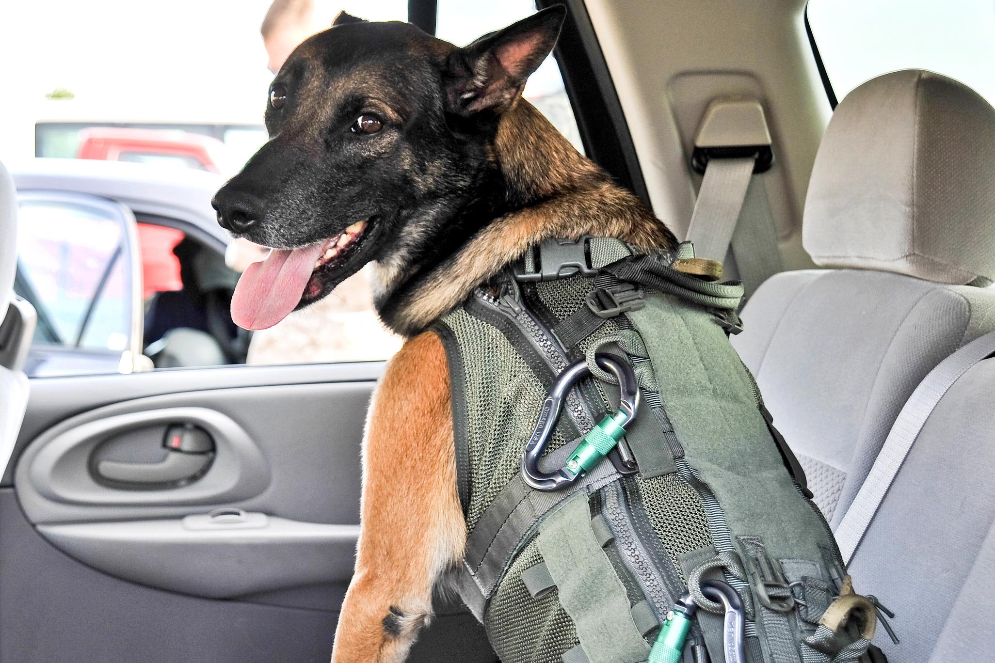 US Military Dog