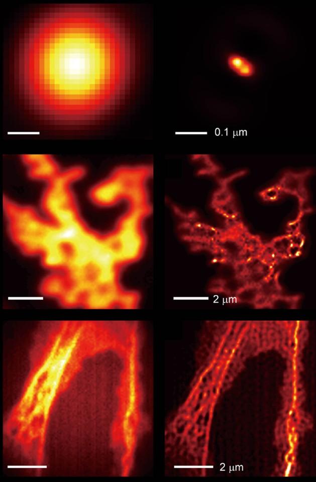microscope samples comparison